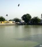 Ram Tirath Sarovar Picture