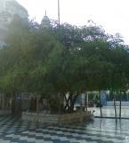 Gurdwara Achal Sahib Pictures