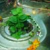 Shivala Ganga Ram Mandir Photographs, Shivala Mandir Pictures, Shivala Temple Amritsar